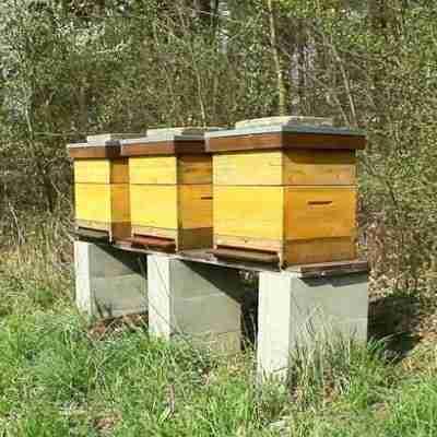 Beehive Thumbnail Shot